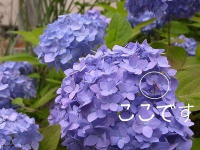 Endress_summer2011_2
