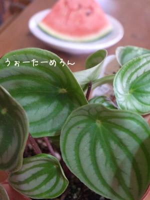 Burogu2013_07_20_watermel