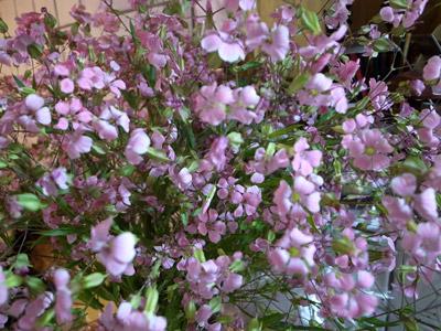 Burogu20140518flower