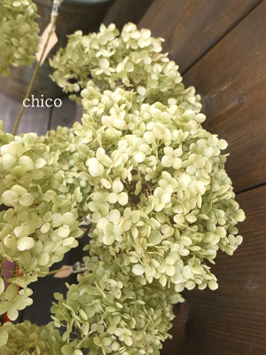 Chico416karabb