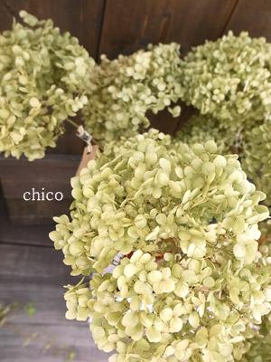 Chico416karacc